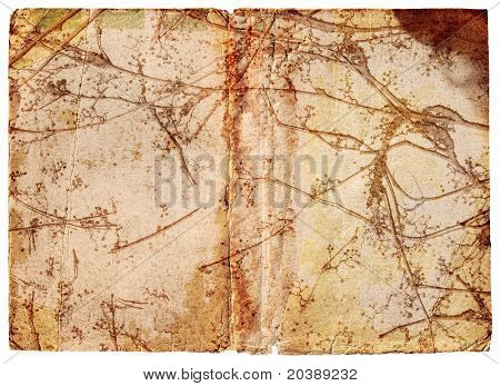 Page with burnt edges and moist stains and vine with seeds texture