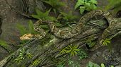 stock photo of green tree python  - amazon python on tree trunk - JPG