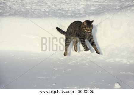 Funny Jumping Cat