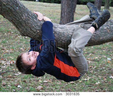 Happy Boy Hangs Down On Tree