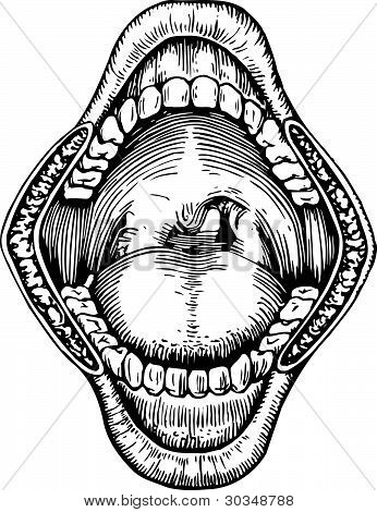 Human mouth open