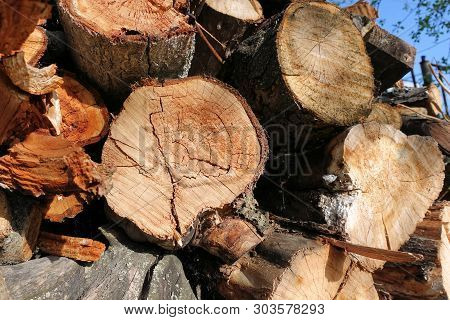 poster of Logs. Log Cuts. Stack Of Logs. Stack Of Firewood. Logs Cuts Prepared For Fireplace. Woodpile. Wood F