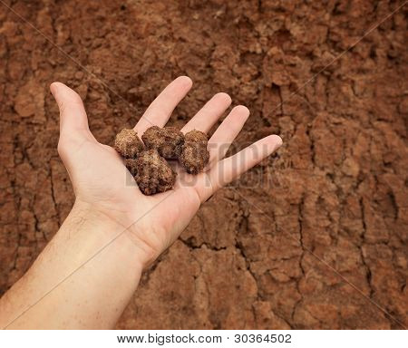 Hand With Lumps Of Clay Ground