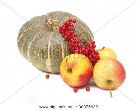 green pumpkin, tasty apples and red arrowwood