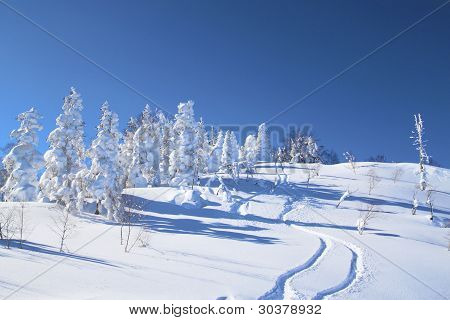 Ski Run