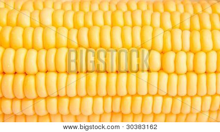 Macro Shot Of Corn Used For Ethanol Fills The Frame