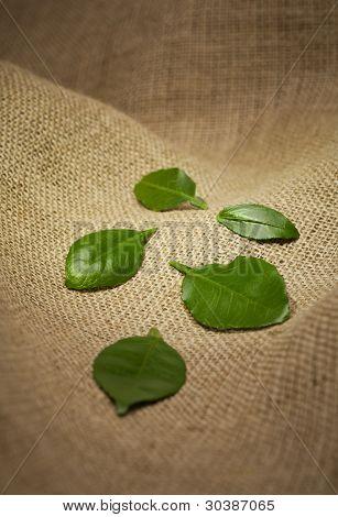 Leaves On Burlap