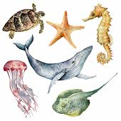 Watercolor Underwater Animals Set. Hand Painted Whale, Starfish, Seahorse, Stingray, Jellyfish And T poster