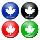 image of canada maple leaf  - illustration of a maple leaf button in four colors - JPG