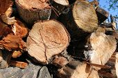 Logs. Log Cuts. Stack Of Logs. Stack Of Firewood. Logs Cuts Prepared For Fireplace. Woodpile. Wood F poster