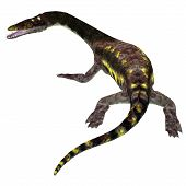 Nothosaurus Reptile Tail 3d Illustration - Nothosaurus Was A Carnivorous Aquatic Reptile That Lived  poster