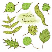 Vector Set Of Forest Green Summer Leaves. Vector Vintage Colored Engraved Illustration Of Hawthorn,  poster