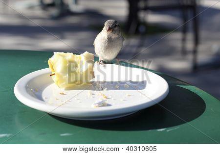 Urban Finch