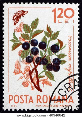 Postage stamp Romania 1964 European Blueberry, Vaccinium Myrtill