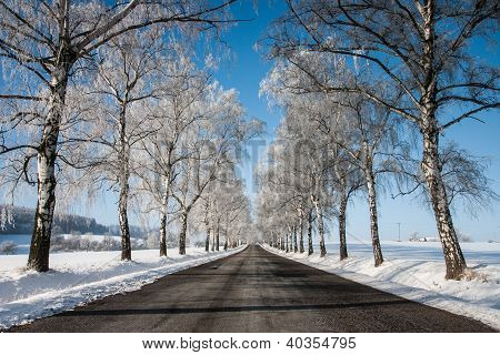 Empty road in winter