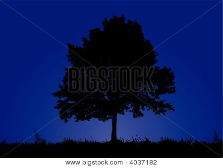 Tree Stands In A Night