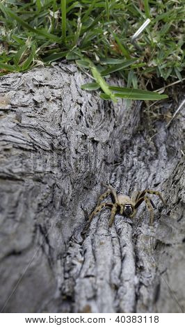 Spider climbing on the tree