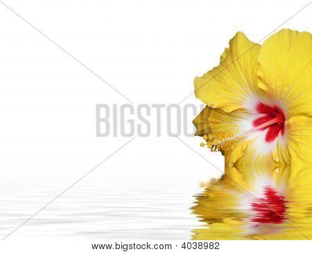 Closeup Of A Hibiscus