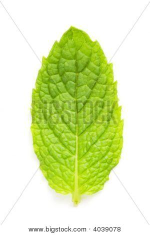 Mint Leaf Macro