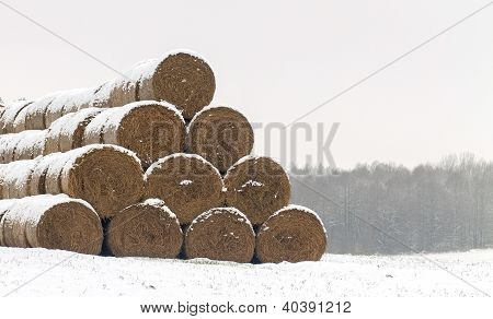 Straw Fodder Bales In Winter