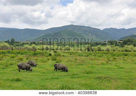 Landscape Of Shangri-la Tibetan Countryside