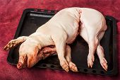 image of fat-guts  - gutted Pig being killed at a farm - JPG