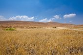 stock photo of samaria  - Stones in Sand Hills of Samaria Israel - JPG