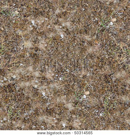 Seamless Texture of  Prairie Soils.