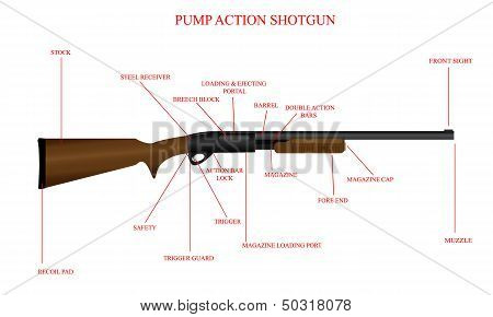Labeled Shotgun Diagram