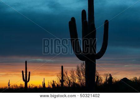 Glowing Desert Skies