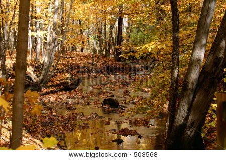 Golden Autumn Stream