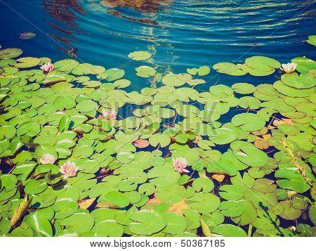 Retro Look Waterlily