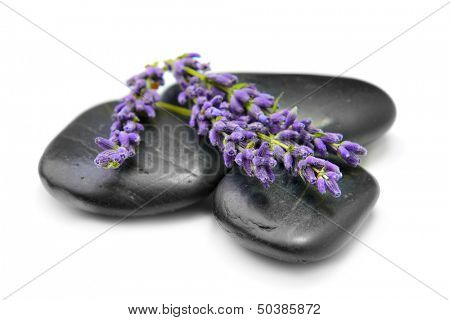 stones and lavender on the white background