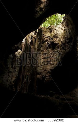 View of a cave opening with tree roots growing down