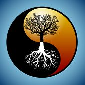 foto of taoism  - Tree and it - JPG
