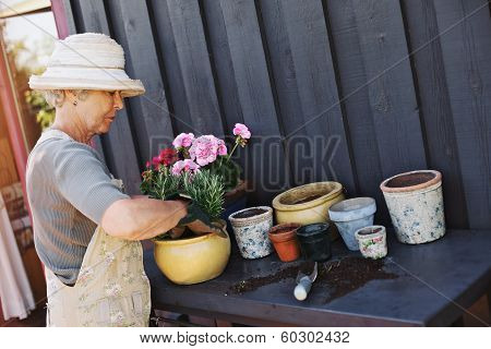 Active Senior Woman Planting New Plants In Terracotta Pots