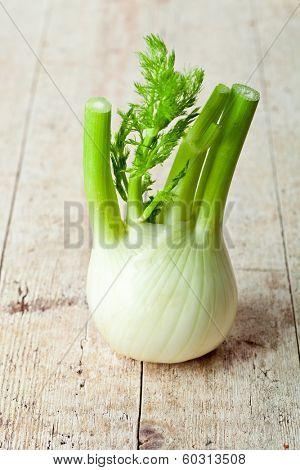 fresh organic fennel on a wooden background