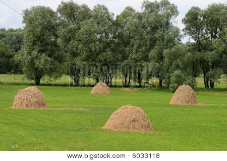 Four hay cocks on green meadow