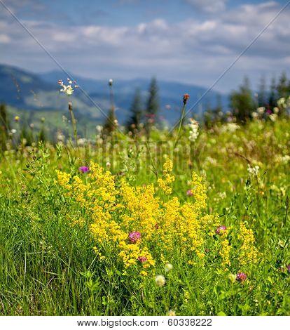 Summer Landscape In Ceahlau Mountains