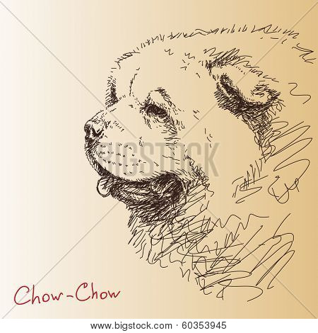 Chow-chow dog Vector sketch