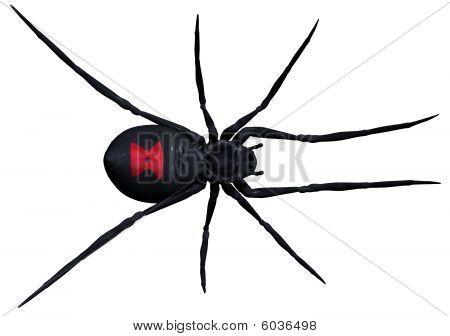 Black Widow Spider Pose 1