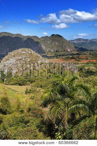 Cuba. Tropical nature of Vinales Valley.
