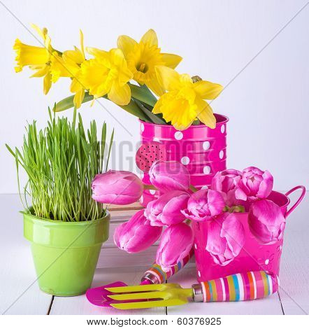 Spring flowers and green grass with garden tools on white background.