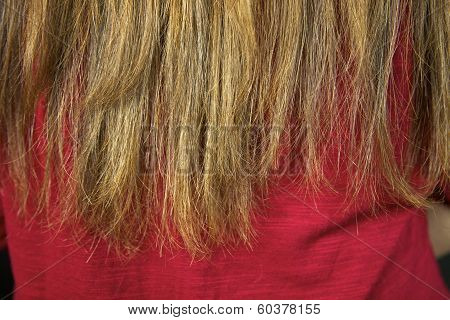 Closeup Of Ruined Split Ends Hair Ready To Be Cut