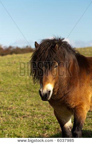 Cute Horse Pony