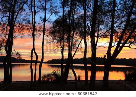 Sunrise Reflections And Casuarina Silhouettes At The Lagoon