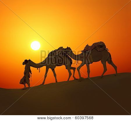 cameleer leading caravan of camels in desert - silhouette against sunset