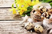 stock photo of quail egg  - Easter setting with quail eggs and yellow daffodils on old wood background - JPG