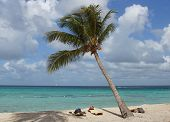 picture of west indies  - Caribbean Beach with palm trees - JPG