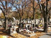 Small cemetery with autumn leaves and evening sun